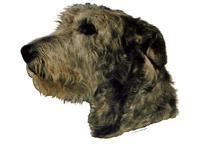 Irsk ulvehund mørk