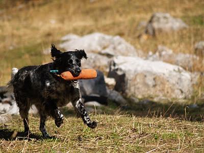 Brukshund