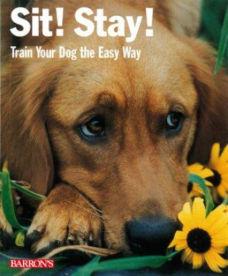 Sit! Stay! Train your dog